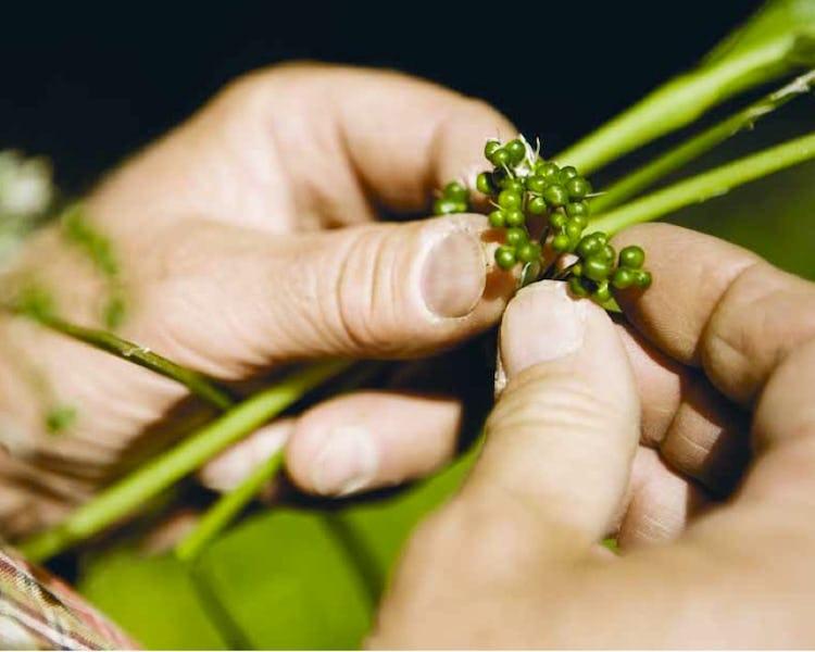 Das Wissen über wilde Pflanzen sollte laut Roland Rittman zur Allgemeinbildung gehören.