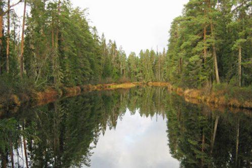 nationalparks.fi, Tarja Teppo