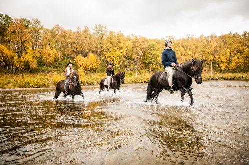 RÖJK till häst 2
