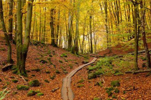 buchenwald soderas