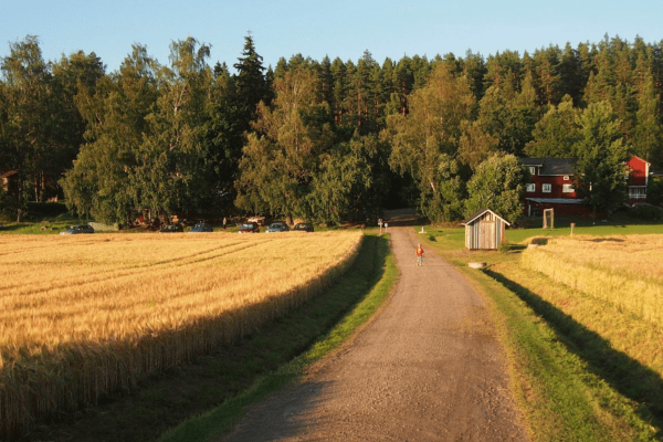 haltiala-pilze-sammeln-finnland-helsinki