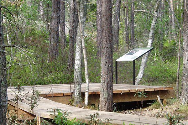 tyresta-nationalpark-pilye-sammeln-herbst